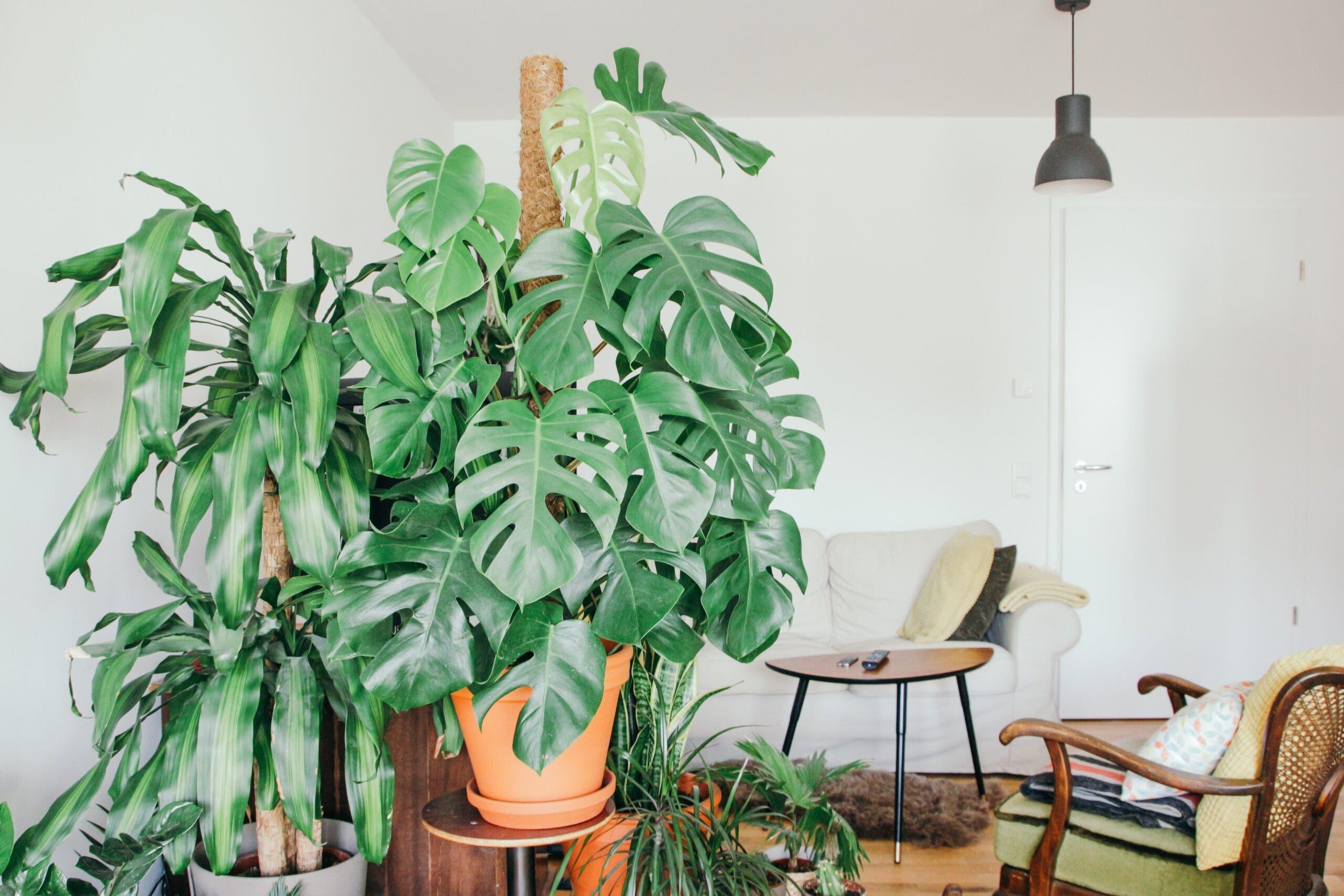 6 Stylish Bohemian Style Living Room Ideas